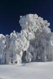 De bomen van de winter Royalty-vrije Stock Foto