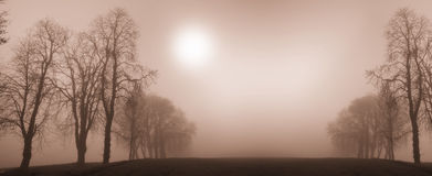 De bomen van de winter Royalty-vrije Stock Foto's