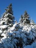 De bomen van de winter Stock Foto's