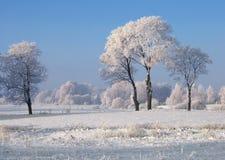 De bomen van de winter Stock Fotografie