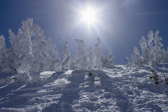 De Bomen van de winter Royalty-vrije Stock Afbeeldingen