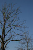 De Bomen van de winter Royalty-vrije Stock Fotografie