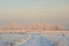 De bomen van de winter in de sneeuw Royalty-vrije Stock Fotografie