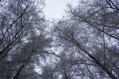 De bomen van de winter die met sneeuw worden behandeld Royalty-vrije Stock Afbeelding