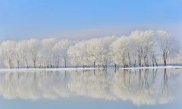 De bomen van de winter die met vorst worden behandeld Royalty-vrije Stock Foto's