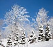 De bomen van de winter tegen een blauwe hemel. Royalty-vrije Stock Fotografie