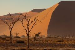 De bomen van de woestijn Stock Fotografie