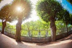 De bomen van de zonlichttrog Stock Foto