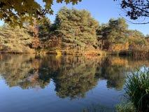 De bomen van de herfst door het water stock afbeeldingen