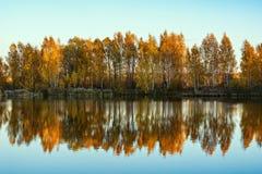 De bomen van de de herfstberk door het meer stock afbeelding