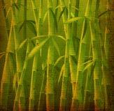 De bomen van het bamboe Royalty-vrije Stock Afbeelding