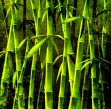 De bomen van het bamboe Stock Afbeeldingen