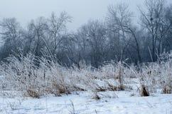 De bomen van het de winterlandschap Royalty-vrije Stock Foto
