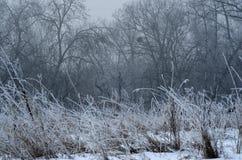 De bomen van het de winterlandschap Royalty-vrije Stock Fotografie