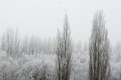 De bomen van het de winterlandschap met sneeuw worden behandeld die Royalty-vrije Stock Afbeelding