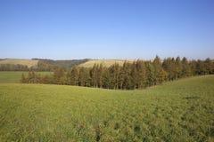 De bomen van het gras en blauwe hemel Royalty-vrije Stock Foto's
