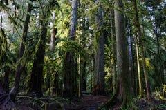 De Bomen van het kathedraalbosje Stock Foto's