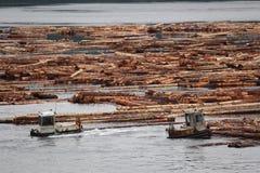 De Bomen van het logboek, het Eiland van Vancouver, Brits Colombia Stock Afbeeldingen
