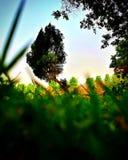De Bomen van het park Stock Foto