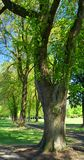 De Bomen van het park Stock Afbeeldingen