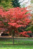 De Bomen van het Roathpark in Cardiff royalty-vrije stock afbeelding
