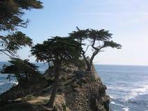 De Bomen van het spook Stock Fotografie