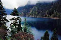 De bomen van het water royalty-vrije stock foto's