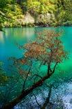 De bomen van het water royalty-vrije stock afbeeldingen