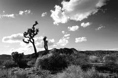De Bomen van Joshua Stock Afbeelding