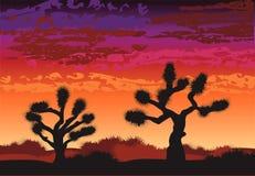 De bomen van Joshua in bruin Stock Foto