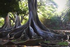 De Bomen van Jurassic Park Royalty-vrije Stock Afbeelding