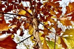De Bomen van New England Stock Fotografie