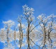 De bomen van Nice op de winter Stock Fotografie