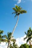 De bomen van palmen op het strand Royalty-vrije Stock Fotografie