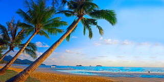 De bomen van palmen op het tropische strand Stock Foto