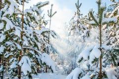 De bomen van de pijnboom die met sneeuw worden behandeld royalty-vrije stock afbeeldingen