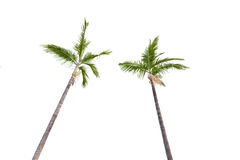De bomen van Plam op wit Stock Afbeelding