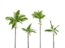 De bomen van Plam op wit Royalty-vrije Stock Afbeeldingen
