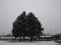 De bomen van de sneeuwdekking Royalty-vrije Stock Foto's