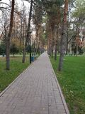 De bomen van de de wegpijnboom van het de herfstpark royalty-vrije stock afbeeldingen
