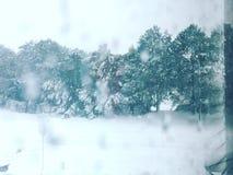 De Bomen van de winter stock afbeeldingen