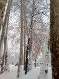 De bomen van de winter die met sneeuw worden behandeld stock afbeelding