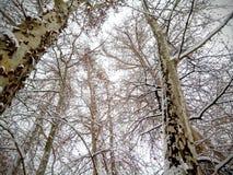 De bomen van de de wintersneeuw, mening van onderaan stock foto's