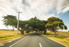 De bomen vormen natuurlijke boog in Nieuw Zuid-Wales, Australië Stock Afbeeldingen
