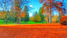 De bomen werpen zich af aangezien de winter in hun midden is Stock Afbeelding