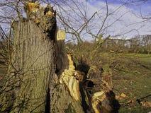 De bomen worden binnen park stock afbeelding
