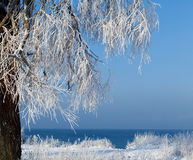 De bomen zijn behandeld met sneeuw en hoar vorst Royalty-vrije Stock Foto's