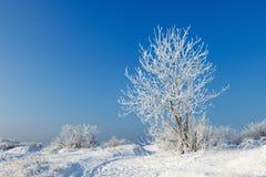 De bomen zijn behandeld met sneeuw en hoar vorst Royalty-vrije Stock Afbeeldingen
