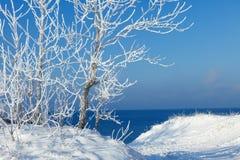 De bomen zijn behandeld met sneeuw en hoar vorst Stock Afbeeldingen