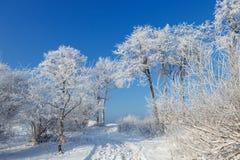 De bomen zijn behandeld met sneeuw en hoar vorst Stock Afbeelding